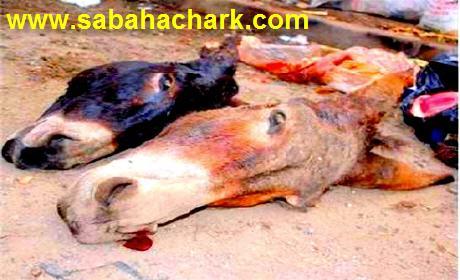 الدار البيضاء: إكتشاف أشلاء حمير مذبوحة . ليتفجأ بوجود بقايا لحمير مذبوحة