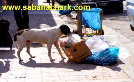 الكلاب الضالة تهدد سلامة سكان مدينة أكليم