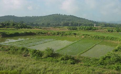 سقي مزروعات بالمياه العادمة لأكليم يهدد صحة المستهلكين