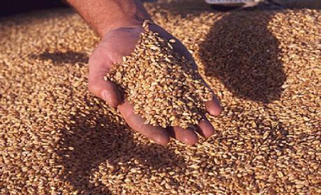 المغرب يسعى لشراء 163.5 ألف طن قمحا لينا من السوق المحلية