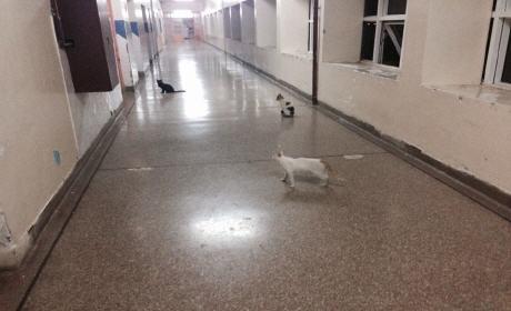 القطط تتخذ من مستشفى الفارابي بوجدة مأوى آمنا