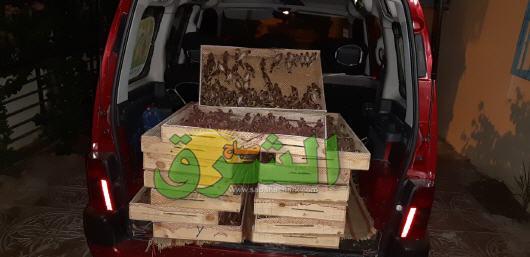 جمارك وجدة تحجز 1700 طائر من نوع الحسون على مثن سيارة مهربة إلى القطر الجزائري