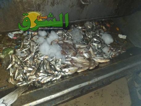 حجز 180 كلغ من الأسماك المتنوعة ببركان