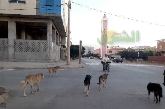 الكلاب الضالة ببركان تهدد حياة المواطنين وتحول حياتهم إلى جحيم