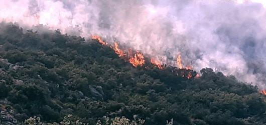 ألسنة النيران تلتهم مساحات شاسعة بغابة عين المو
