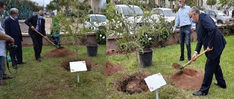 جامعة محمد الأول بوجدة تحتفل باليوم العالمي الأول لشجرة الأركان