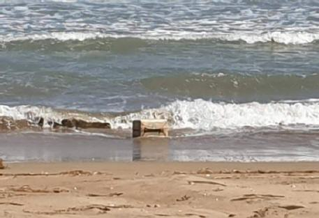 """أمواج بحر شاطئ السعيدية تلفظ كميات مهمة من مخدر """"الشيرا"""""""