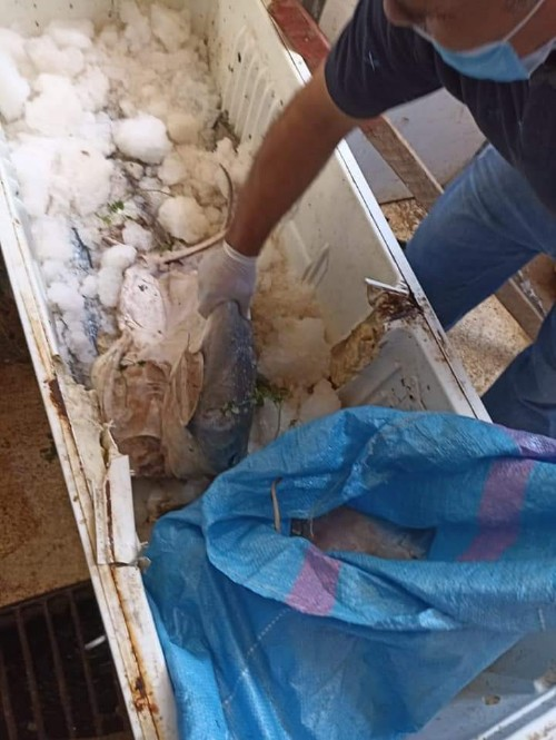 بركان : حجز  ثلاثة قناطر من السمك بسوق مرزوق